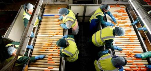 работницы перебирают морковь
